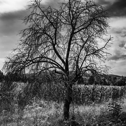 The lost tree..., Canon EOS 6D, Canon EF 28-200mm f/3.5-5.6 USM