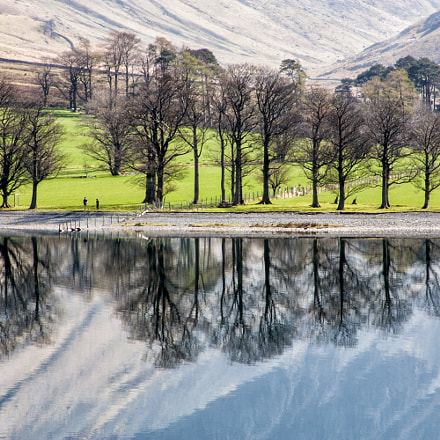 Buttermere trees reflections, Canon EOS-1D MARK II, Canon EF 28-135mm f/3.5-5.6 IS