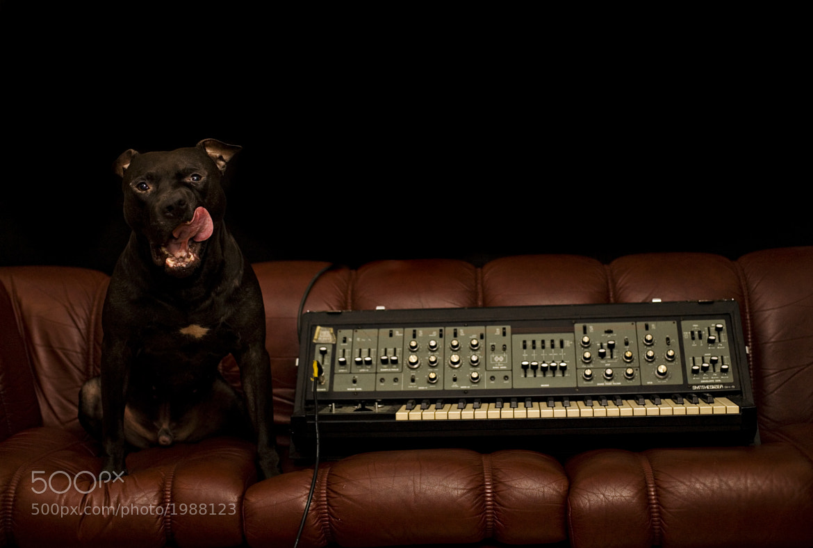 Photograph dogscillator by Tarjei Krogh on 500px