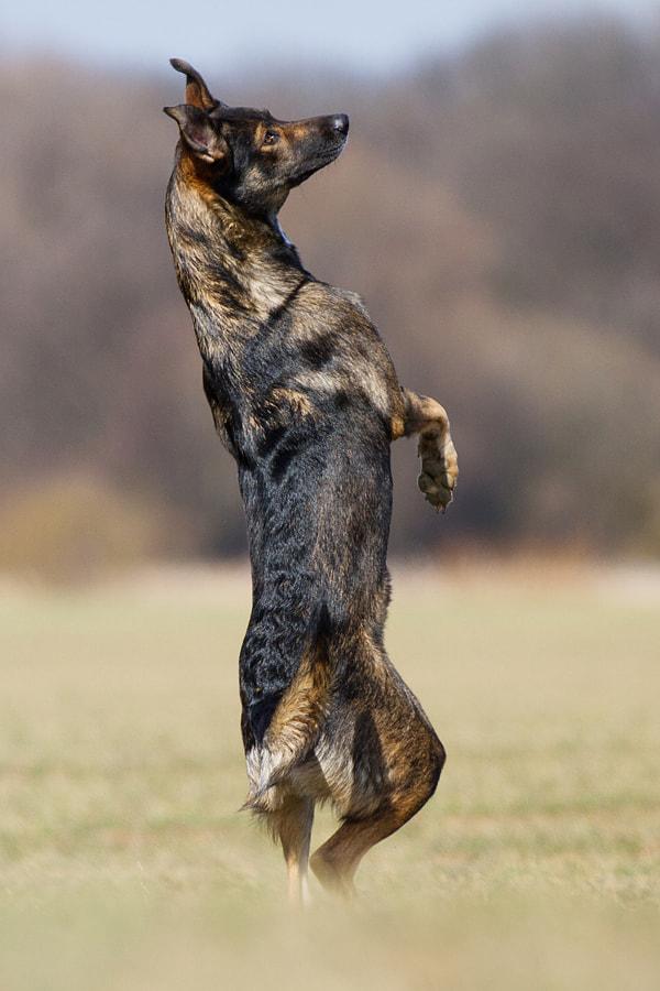 DancingTimber