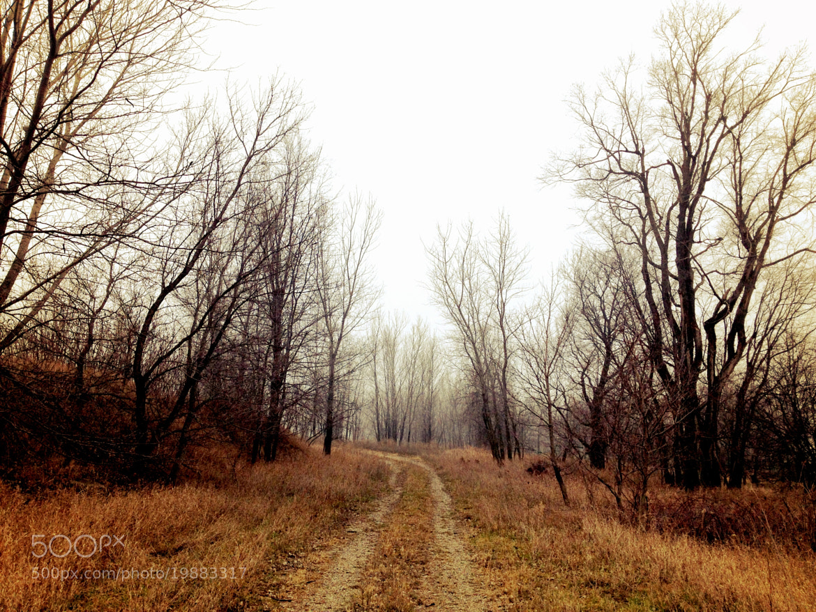 Photograph Misty Morning Road by Risa Jenner on 500px