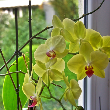Orchidee, Canon EOS 350D