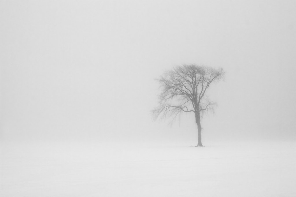 Photograph Alone by Jean Vigneault on 500px
