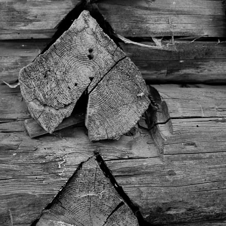 Wood logs, Canon EOS 5D MARK II, Canon EF 20-35mm f/3.5-4.5 USM