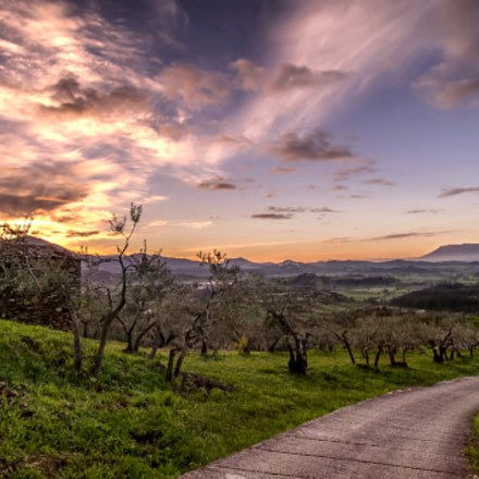 The Olive Trees Path, Nikon D700, Sigma 17-35mm F2.8-4 EX Aspherical