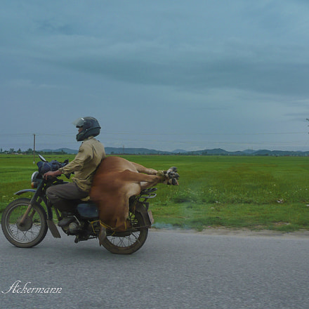 In Vietnam countryside, Panasonic DMC-TZ2