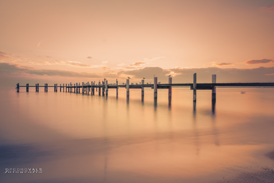Lac Léman by Landscape photographer Pedro Vale on 500px.com
