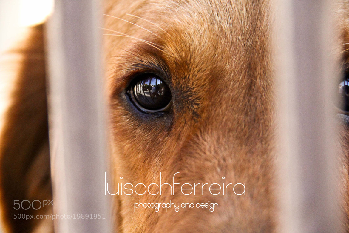 Photograph ´Muñeca by Luis Sachiñas Ferreira on 500px