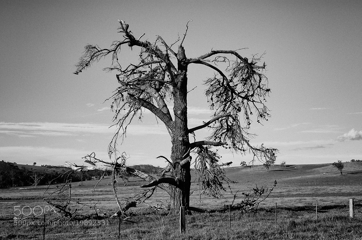 Photograph Tortured Tree by i500 ... on 500px