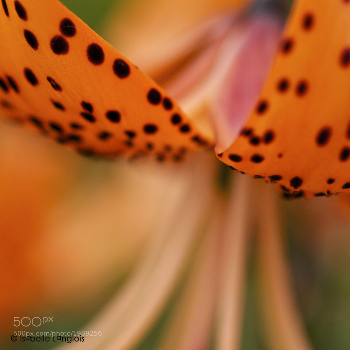 Photograph Polkadots by Isabelle Langlois on 500px