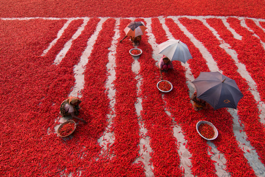 Red Chillies Pickers by Azim Khan Ronnie on 500px.com