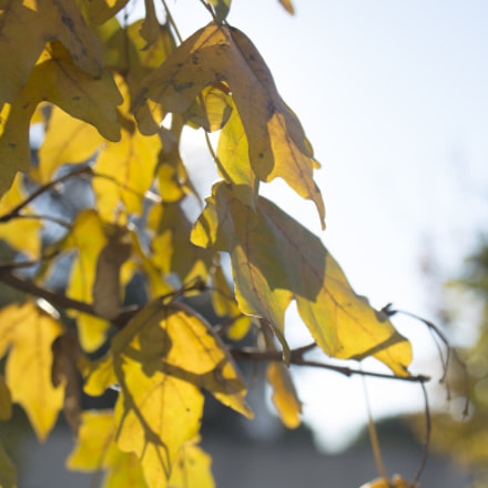 Automne, Canon EOS 6D, Canon EF 22-55mm f/4-5.6 USM