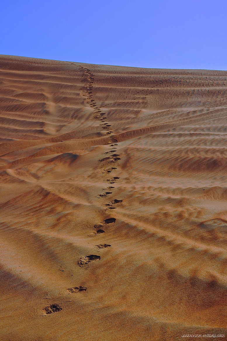 Photograph Camel footprints in the ripples of desert... by Leena'z Anilzam on 500px