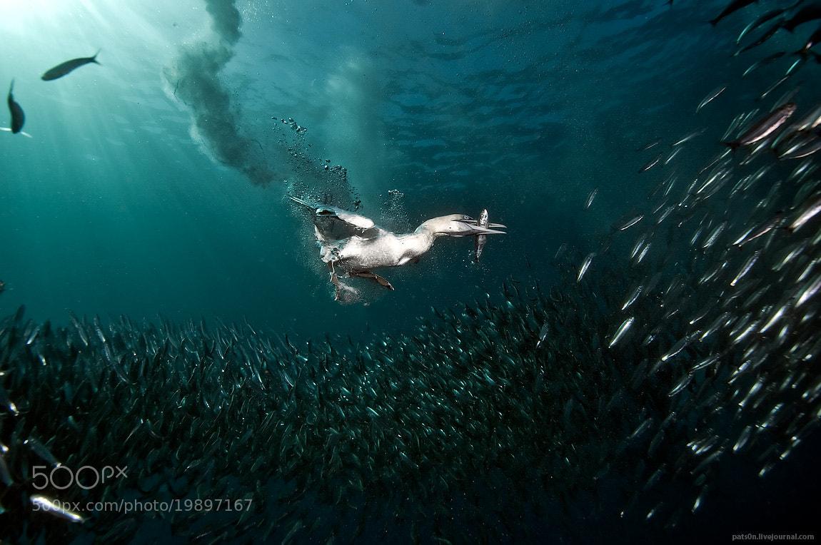 Photograph gotcha !  by Alexander Safonov on 500px