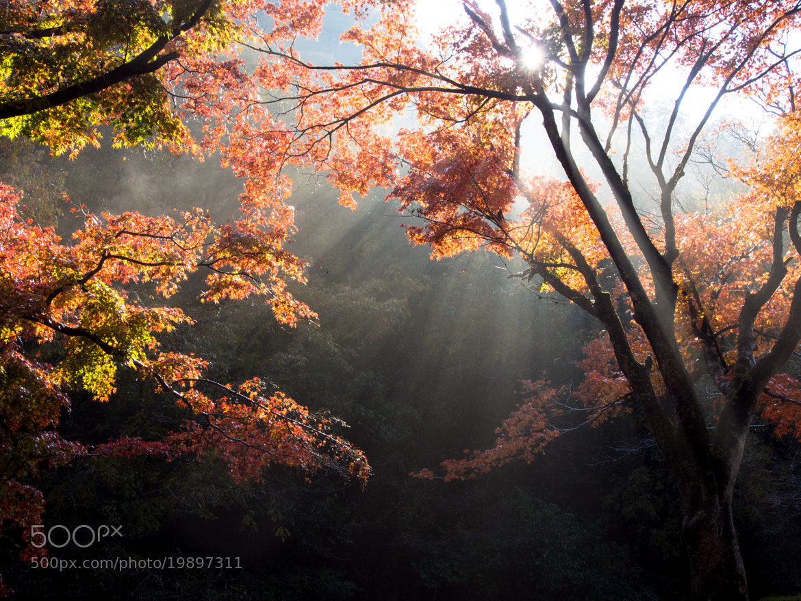 Photograph Autumn colors #7 by Kaz Watanabe on 500px