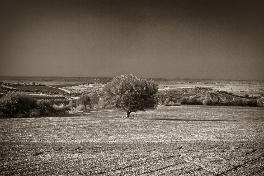 Photograph a lone tree by Homa BahramParvar on 500px