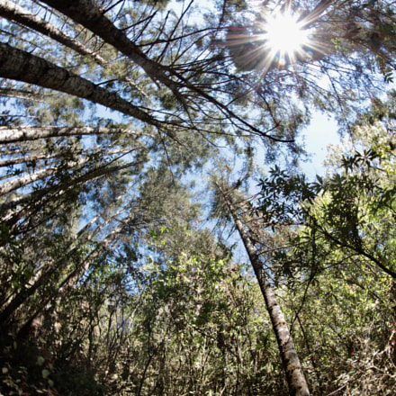 Forest in Mexico where, Canon EOS 5DS R, Canon EF 8-15mm f/4L Fisheye USM