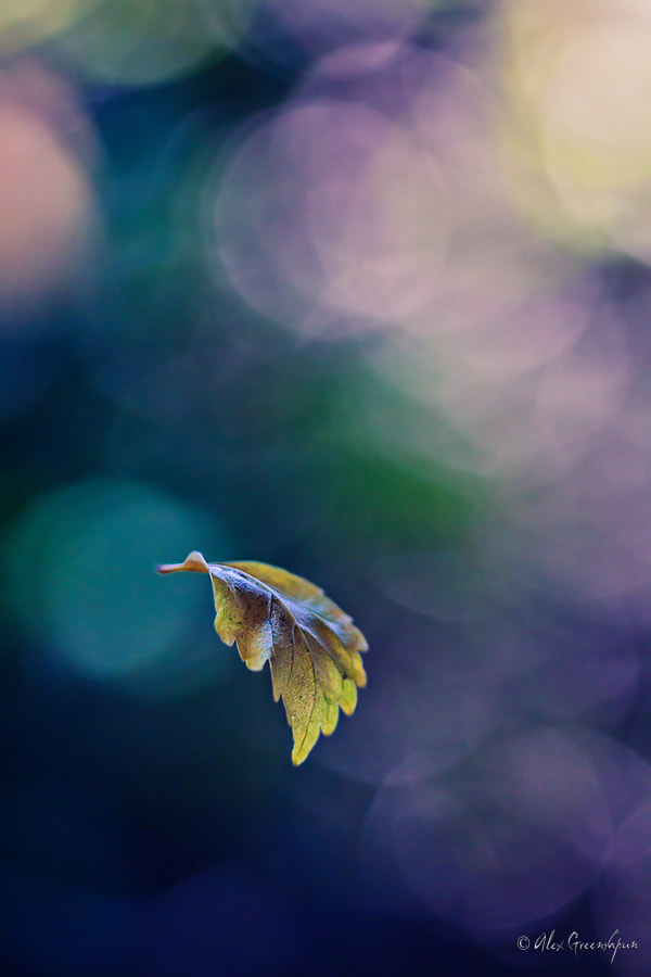 Photograph First Flight by Alex Greenshpun on 500px
