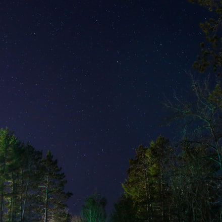 Starry Night with Trees, Canon EOS 6D, Tamron SP 45mm f/1.8 Di VC USD