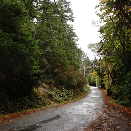 Road on Pender Island, Sony DSC-RX1RM2, Sony 35mm F2.0