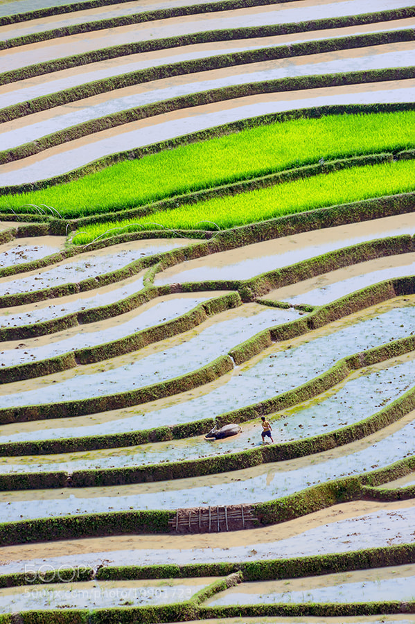 Photograph Steps by Hai Thinh on 500px