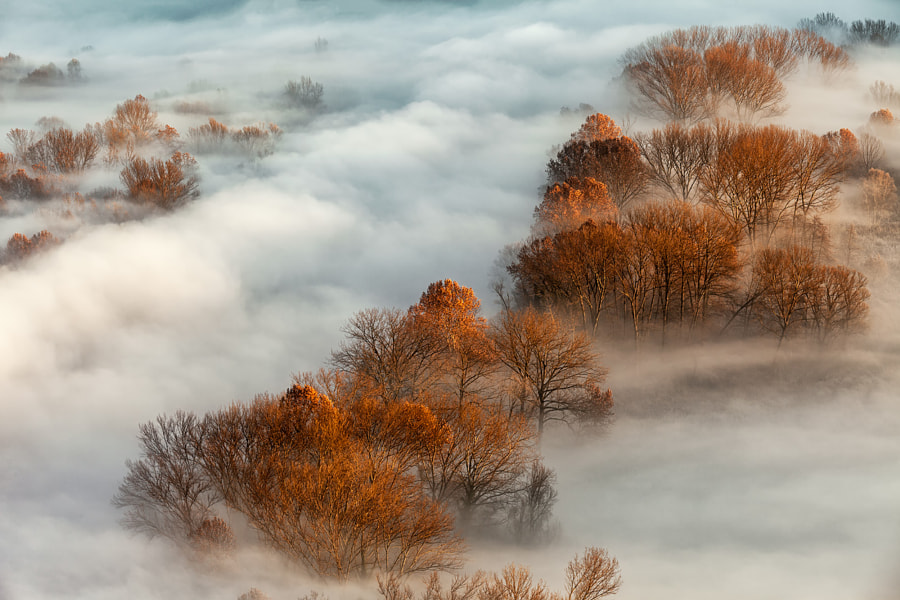 Fog by nature photographer Giancarlo Priore on 500px.com