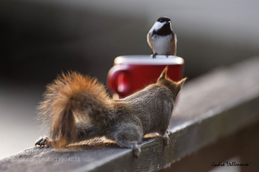 Photograph Coffee for two by Andre Villeneuve on 500px