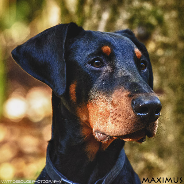 Photograph Not a puppy anymore by Matt Debouge on 500px