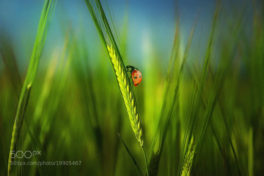 Photograph In the green ears by Silvia Georgieva on 500px