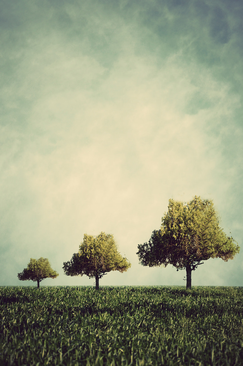 Photograph tree family by Adrian Limani on 500px