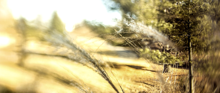 Saturday Afternoon Landscape (Selective Focus) by Jeff Carter on 500px.com