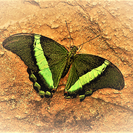 -----Happiness Is A Butterfly-----, Samsung Galaxy S2 Epic