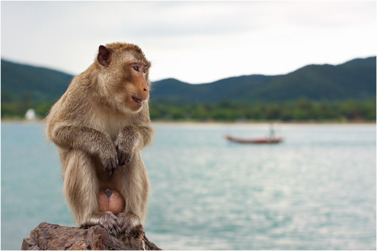 Photograph funny monkey by Anton Likhach on 500px