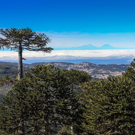 Auraucaria forest, Canon EOS 450D, Canon EF-S 18-200mm f/3.5-5.6 IS