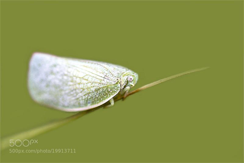 Photograph A small butterfly. by OKAWA โอ๋กะหว้า. somchai on 500px