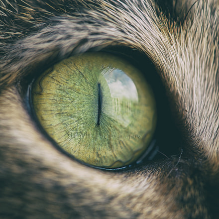Cat´s eye, Nikon D700, AF-S VR Micro-Nikkor 105mm f/2.8G IF-ED