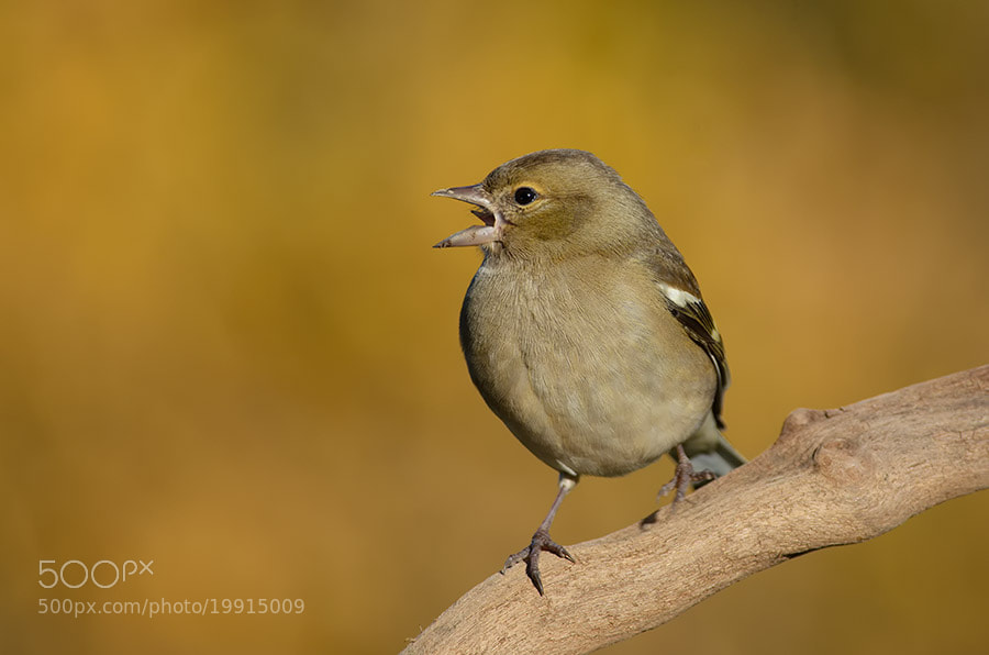 Photograph I sing by Stefano Tassano on 500px