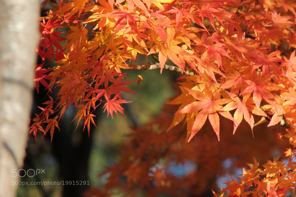Photograph Autumn colors #17 by S.m. Yang on 500px