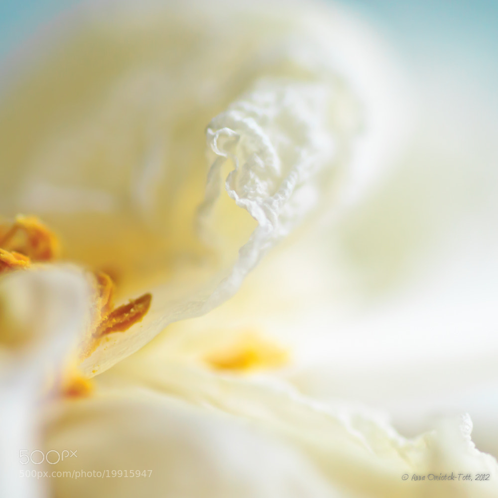 Photograph Meringue by Anna Omiotek-Tott on 500px