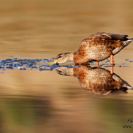 Reflection, Canon EOS 7D, Canon EF 300mm f/2.8L IS