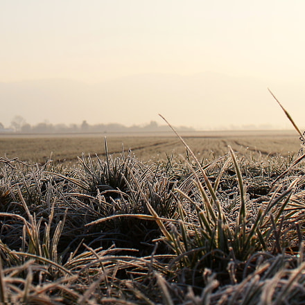 cold morning, Canon EOS 650D, Sigma 18-50mm f/2.8-4.5 DC OS HSM