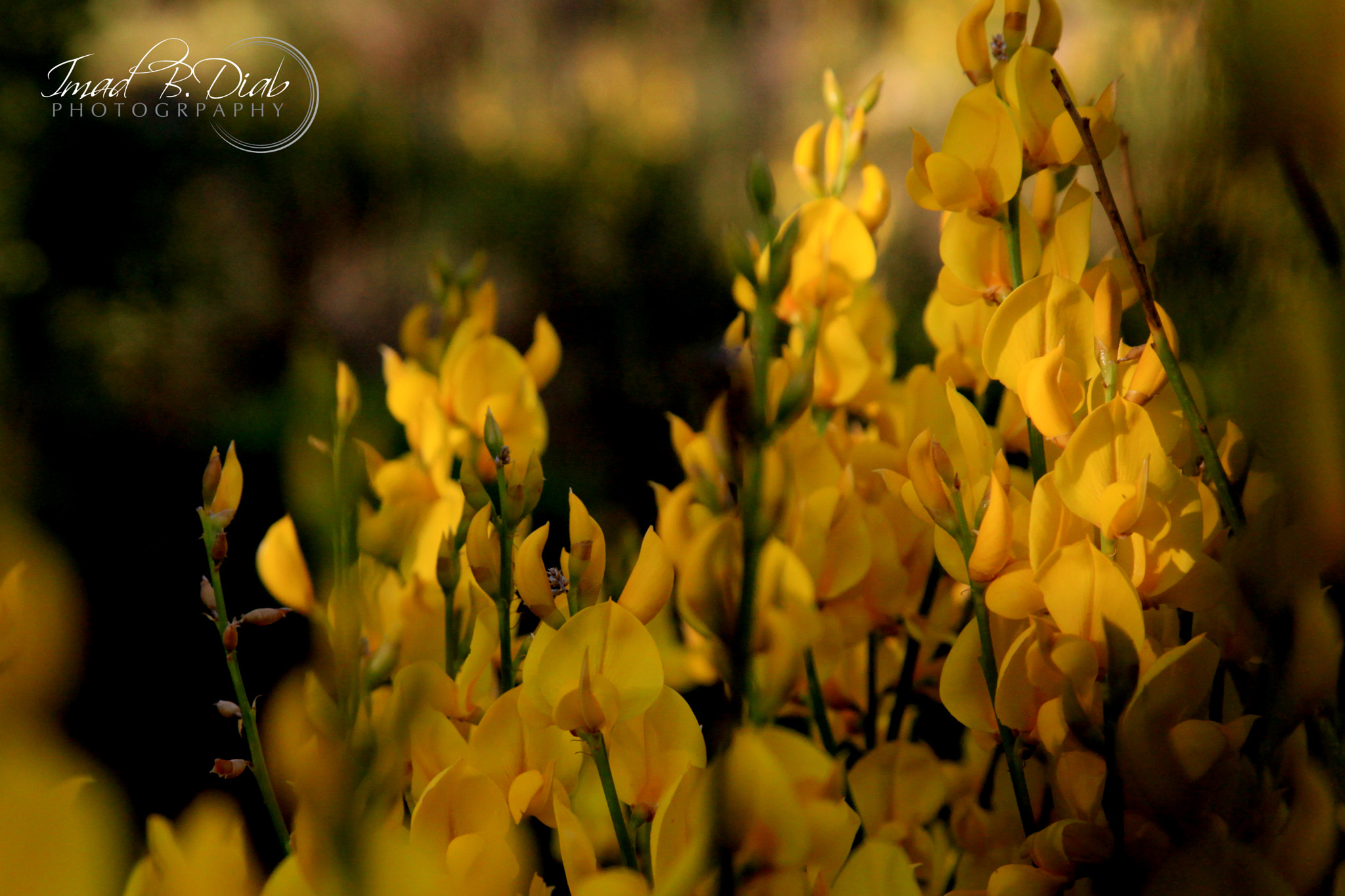 Photograph Joy of Yellow by Imad B.Diab on 500px
