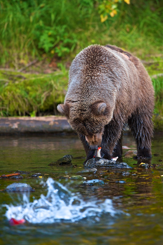 Photograph One Got Away by Buck Shreck on 500px