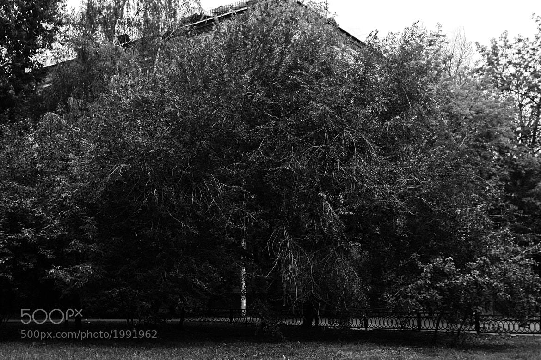 Photograph древо by Vadim Tor on 500px