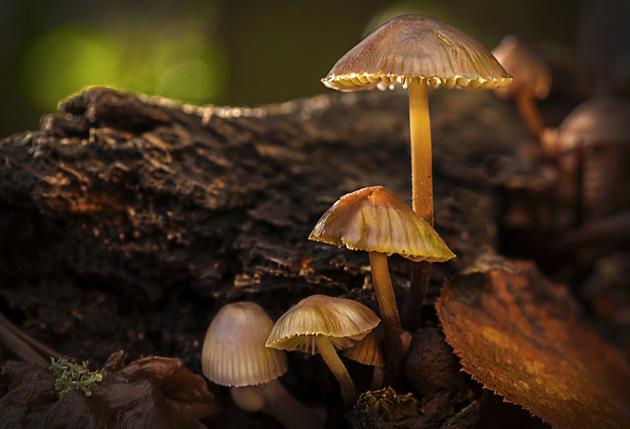 Photograph Dark Wood Fungi by Mark Shoesmith on 500px