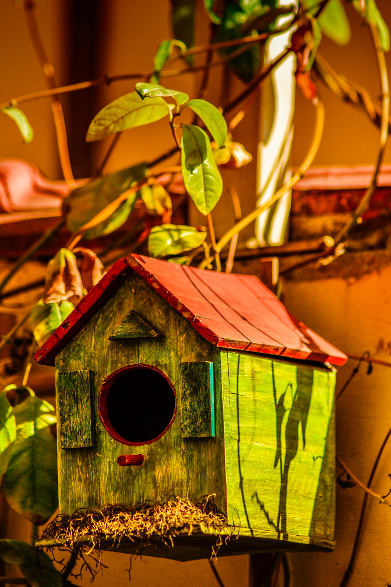 Photograph birdhouse by LH Padovan on 500px