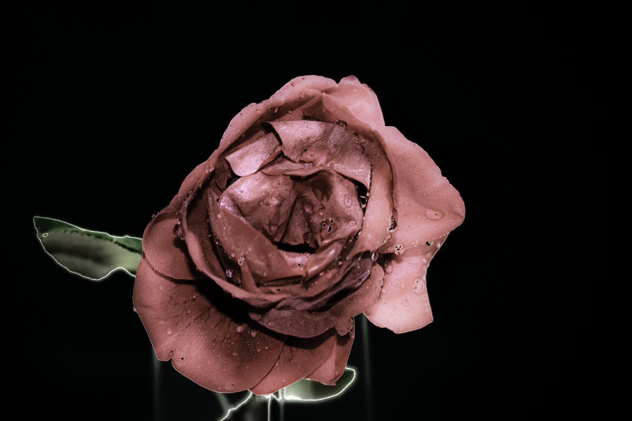 Photograph Solarized rose by Angel Mora on 500px