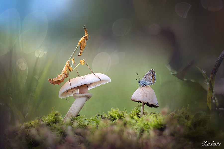 The fairy tale in the woods
