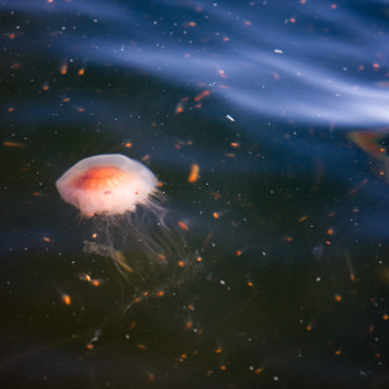 Jellyfish , Canon EOS 40D, Canon EF-S 17-85mm f/4-5.6 IS USM