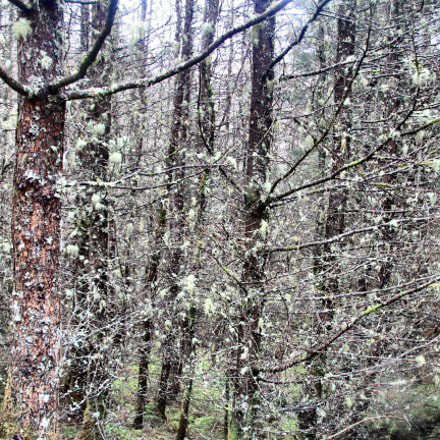 Lichen  forest, Canon EOS 60D, Canon EF-S 17-85mm f/4-5.6 IS USM